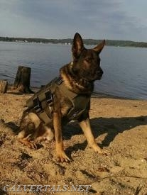 Calvert County Sheriffs Office K9 Loki