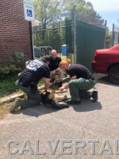 Officers working together to treat the K9 mannequin.