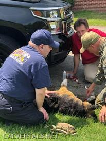 CALS Medic and a K9 officer working as a team to treat an injured working dog.